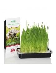 Трава для кошек TiTBiT - фото 10467