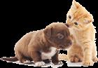 То, что нужно знать каждому будущему владельцу собаки или кошки