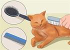Как правильно ухаживать за шерстью кошек