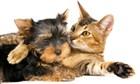3 важных факта о Холистиках - натуральных кормах для животных, разработанных с учетом их природного рациона!