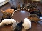Как накормить нескольких кошек?