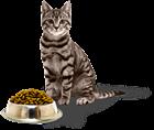 Как правильно кормить кошку? Что нужно учесть?