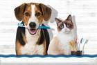Профилактика зубного налета и чистка зубов собакам и кошкам.