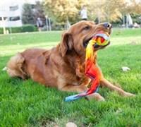 Игрушка для собак Petstages ОН Comet Fetch Ball для бросков